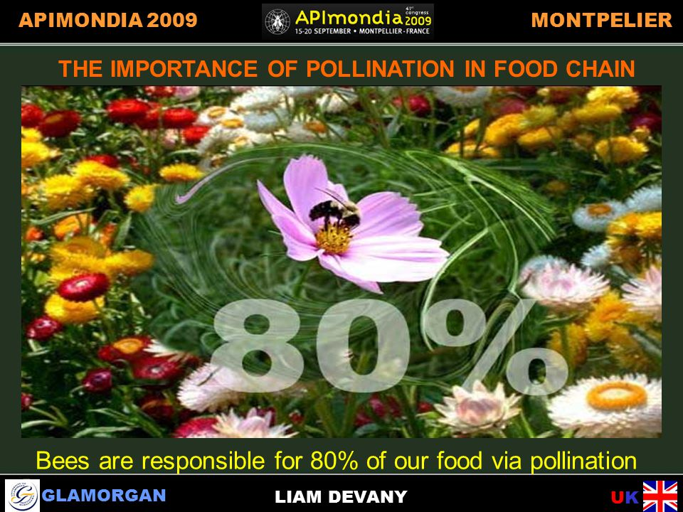 GLAMORGAN UKUK APIMONDIA 2009MONTPELIER LIAM DEVANY IMPORTANCE OF POLLINATION IN FOOD CHAIN THE IMPORTANCE OF POLLINATION IN FOOD CHAIN Bees are responsible for 80% of our food via pollination