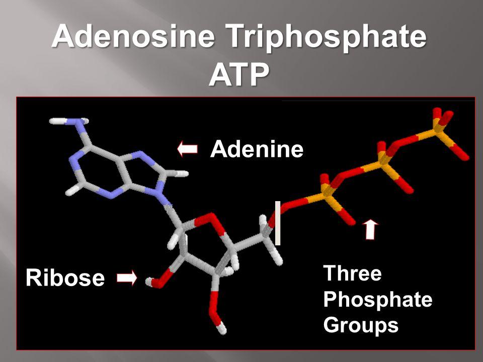 Adenosine Triphosphate ATP Ribose Adenine Three Phosphate Groups