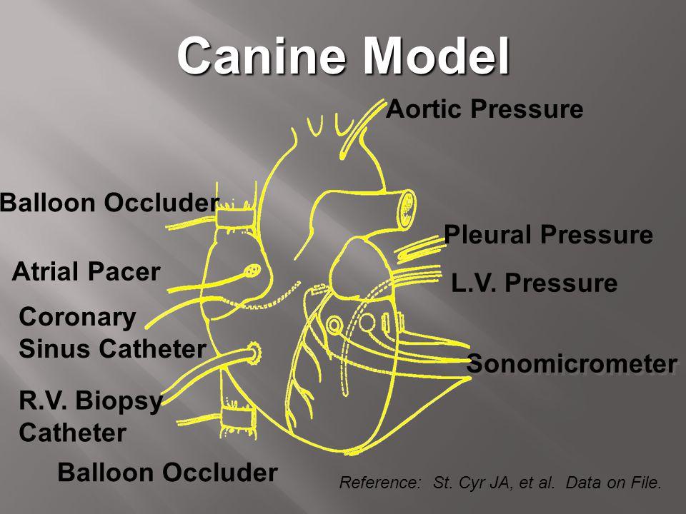 Canine Model Sonomicrometer Aortic Pressure Pleural Pressure L.V. Pressure Balloon Occluder R.V. Biopsy Catheter Coronary Sinus Catheter Atrial Pacer