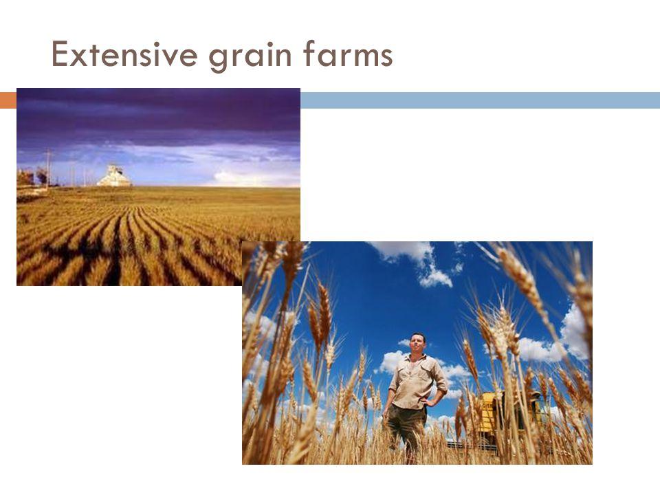 Extensive grain farms