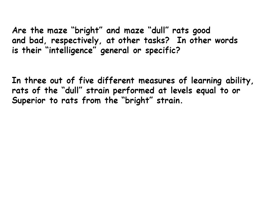 Are the maze bright and maze dull rats good and bad, respectively, at other tasks.