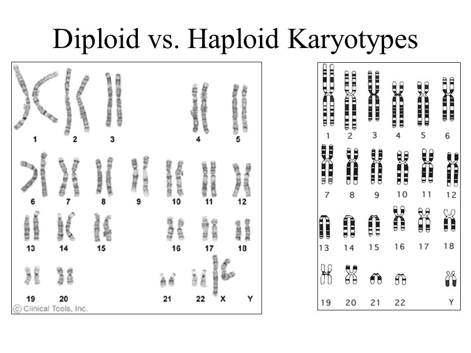 Haploid Cells = Cells with ½ the total number of chromosomes Gametes (sex cells) are the only haploid cells –Ex: Sperm, Egg, Pollen Created by meiosis –Chromosome number reduced by 1/2 How do humans get 46 chromosomes.