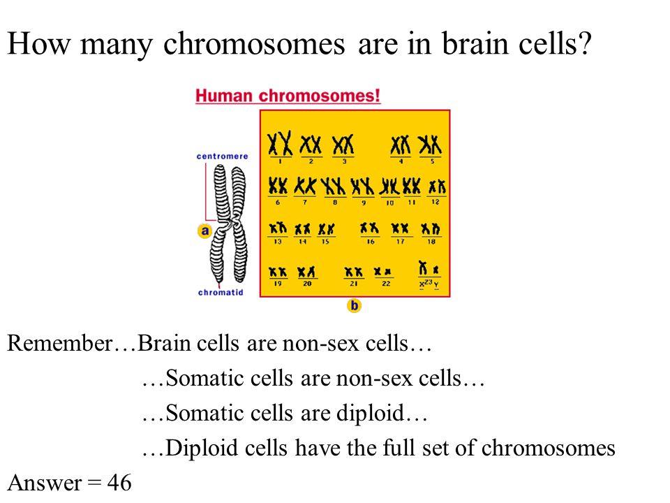Diploid vs. Haploid Karyotypes