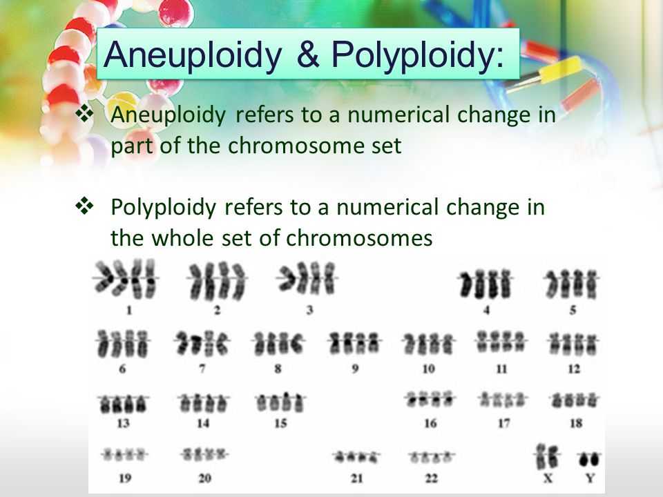  Aneuploidy refers to a numerical change in part of the chromosome set  Polyploidy refers to a numerical change in the whole set of chromosomes Aneu