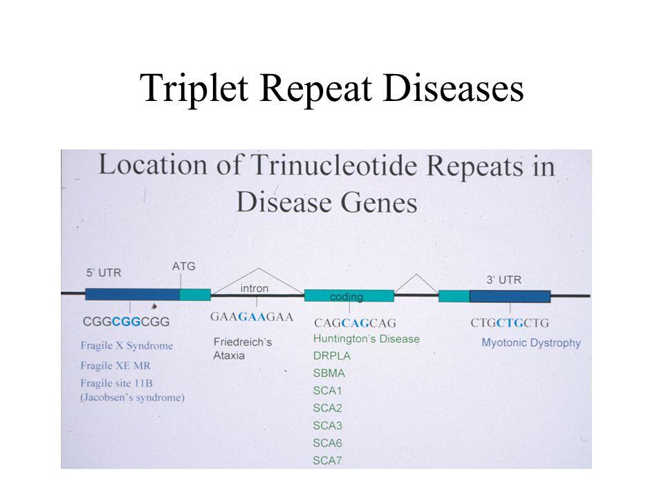Triplet Repeat Diseases