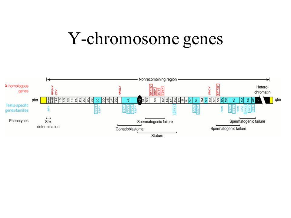 Y-chromosome genes