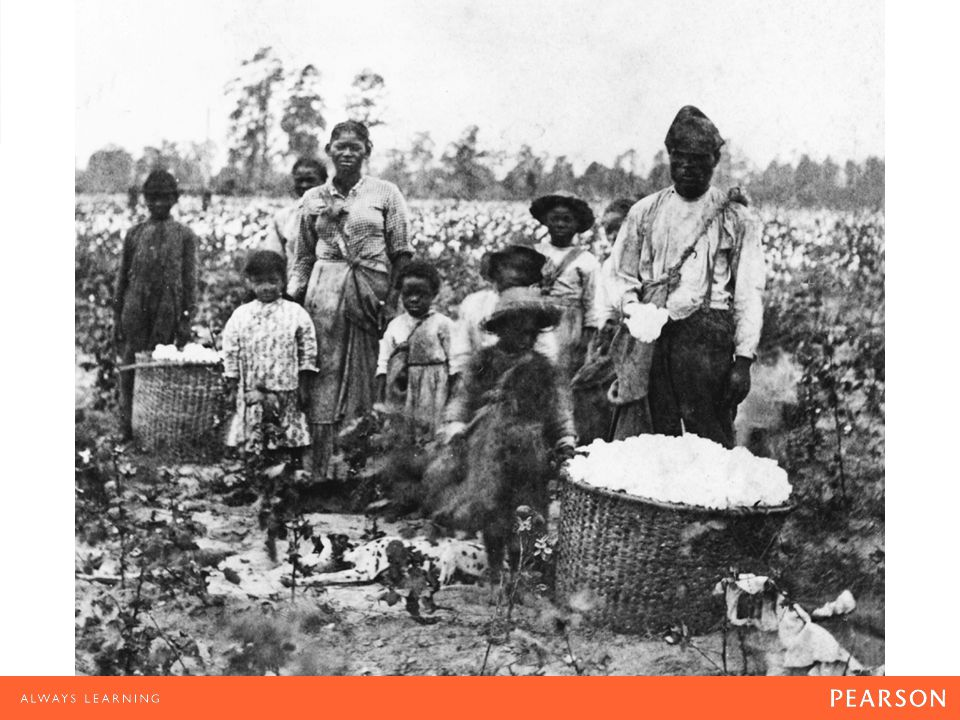 Picking Cotton Although cotton cultivation required constant attention, many of the tasks involved were relatively simple.