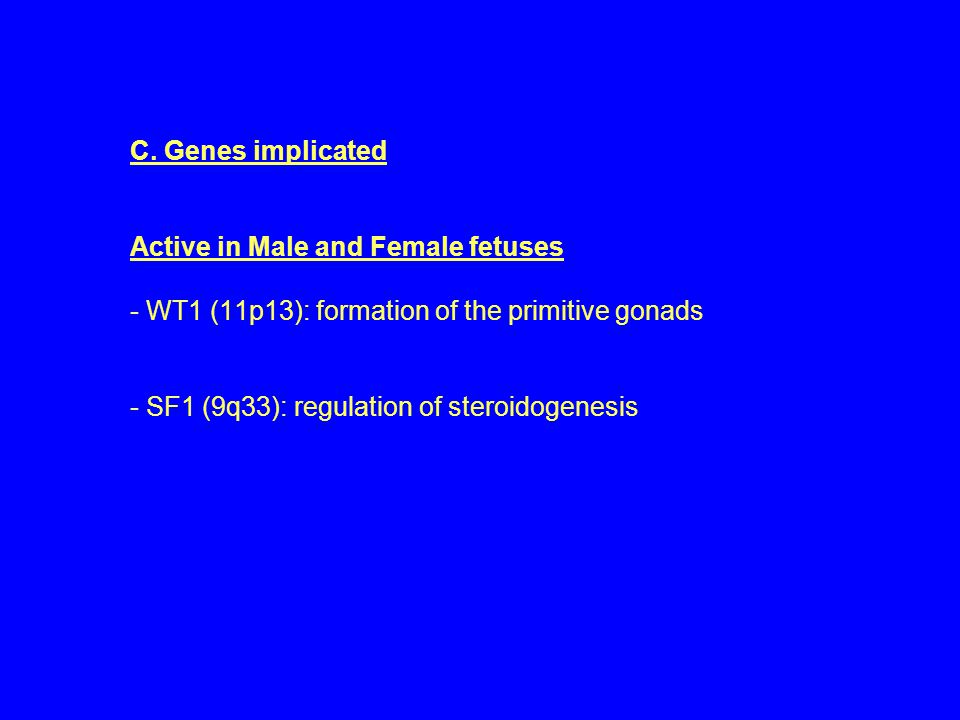 C. Genes implicated Active in Male and Female fetuses - WT1 (11p13): formation of the primitive gonads - SF1 (9q33): regulation of steroidogenesis