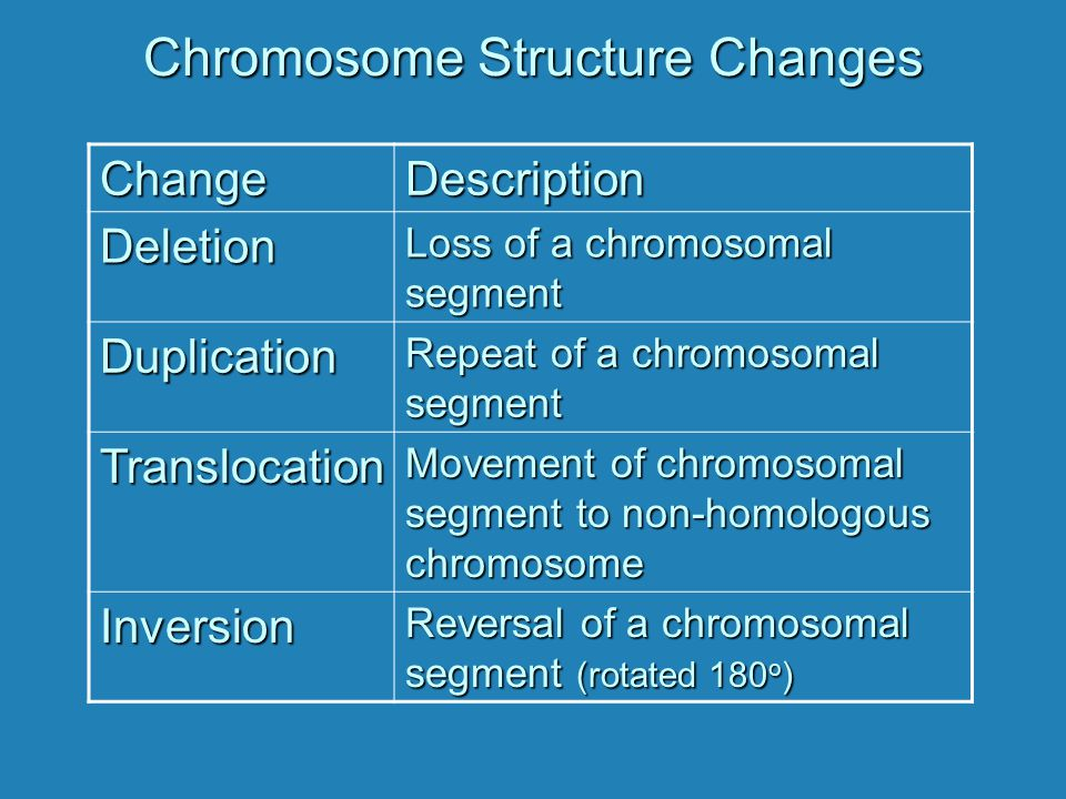 Chromosome Structure Changes ChangeDescription Deletion Loss of a chromosomal segment Duplication Repeat of a chromosomal segment Translocation Moveme