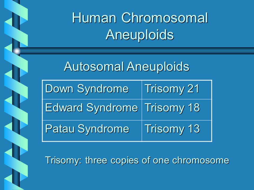 Human Chromosomal Aneuploids Down Syndrome Trisomy 21 Edward Syndrome Trisomy 18 Patau Syndrome Trisomy 13 Autosomal Aneuploids Trisomy: three copies
