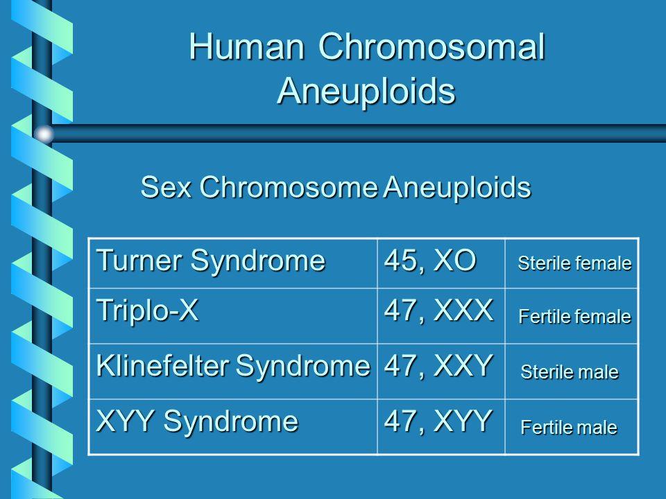 Human Chromosomal Aneuploids Sex Chromosome Aneuploids Turner Syndrome 45, XO Triplo-X 47, XXX Klinefelter Syndrome 47, XXY XYY Syndrome 47, XYY Steri