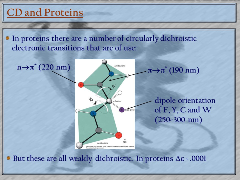 CD and Proteins In proteins there are a number of circularly dichroistic electronic transitions that are of use: n  * (220 nm)  * (190 nm) dipole orientation of F, Y, C and W (250-300 nm) But these are all weakly dichroistic.
