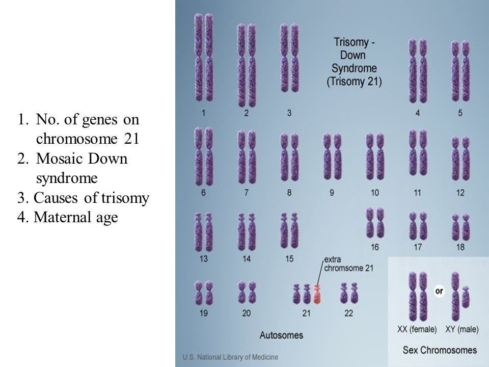 1.No. of genes on chromosome 21 2.Mosaic Down syndrome 3. Causes of trisomy 4. Maternal age