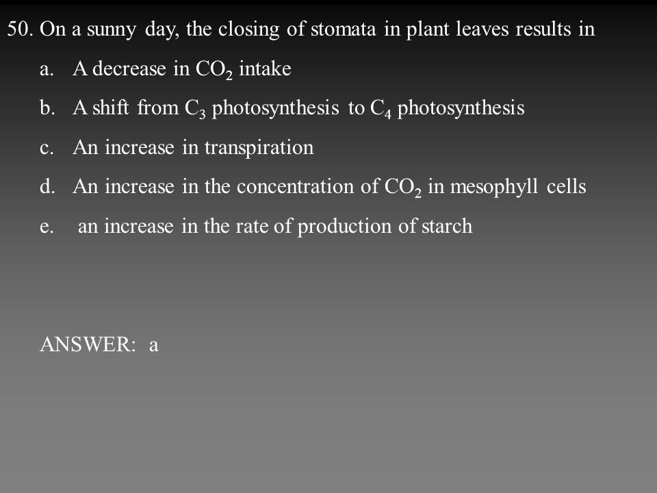 50.On a sunny day, the closing of stomata in plant leaves results in a.A decrease in CO 2 intake b.A shift from C 3 photosynthesis to C 4 photosynthesis c.An increase in transpiration d.An increase in the concentration of CO 2 in mesophyll cells e.