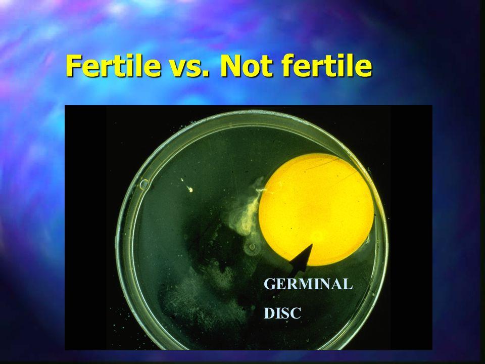 Fertile vs. Not fertile GERMINAL DISC