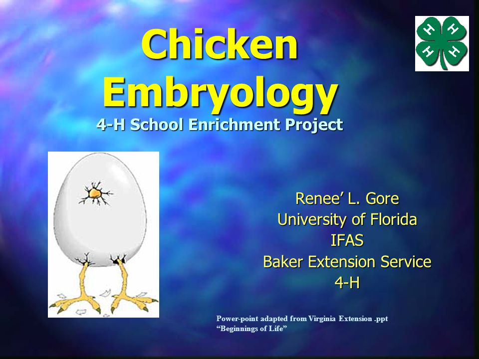 Chicken Embryology 4-H School Enrichment Project Renee' L.