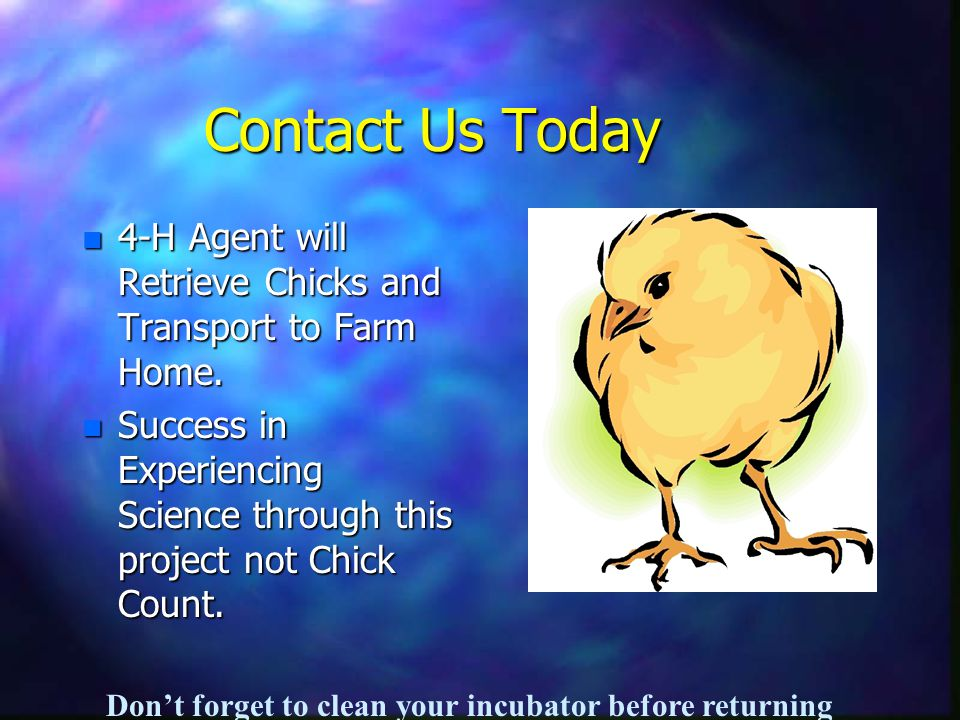 Contact Us Today n 4-H Agent will Retrieve Chicks and Transport to Farm Home.