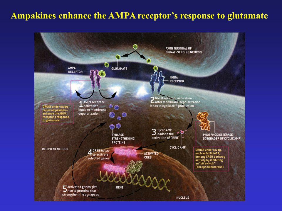Ampakines enhance the AMPA receptor's response to glutamate