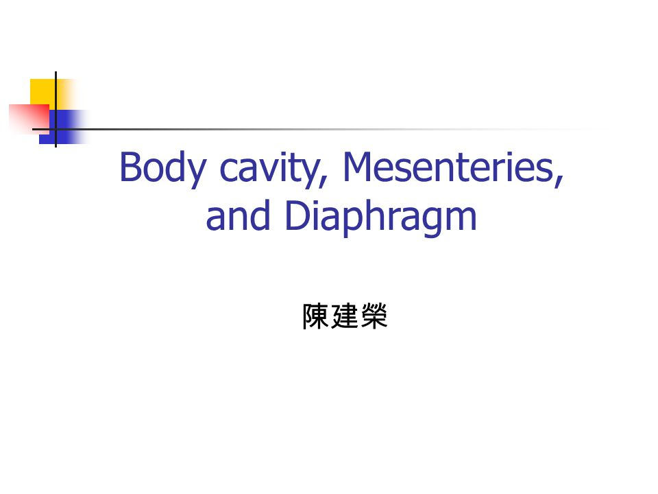 Body cavity, Mesenteries, and Diaphragm 陳建榮