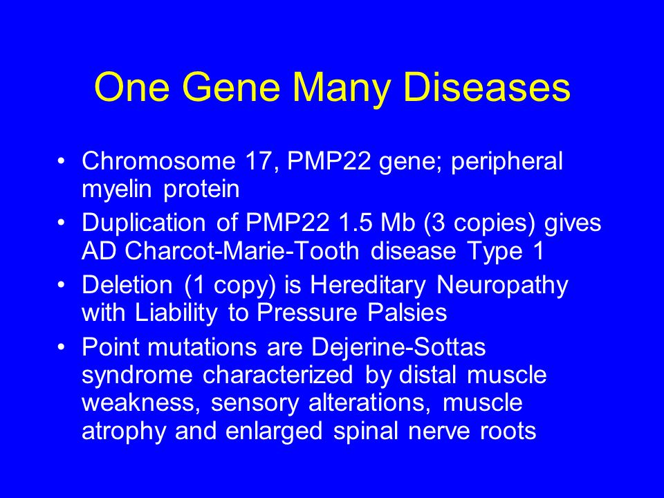 One Gene Many Diseases Chromosome 17, PMP22 gene; peripheral myelin protein Duplication of PMP22 1.5 Mb (3 copies) gives AD Charcot-Marie-Tooth diseas