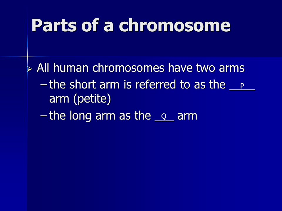 Parts of a chromosome  All human chromosomes have two arms –the short arm is referred to as the ____ arm (petite) –the long arm as the ___ arm P Q