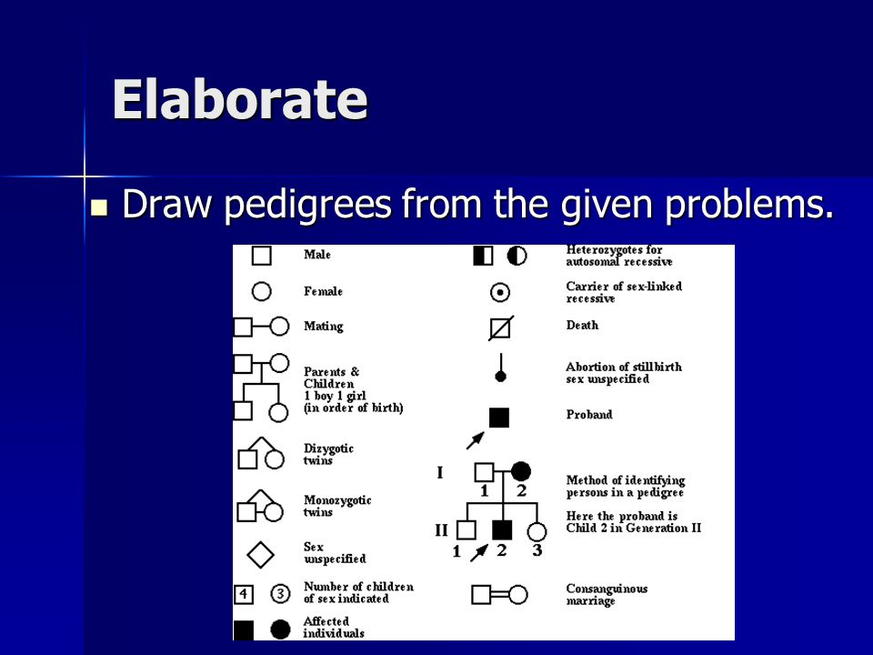 Elaborate Draw pedigrees from the given problems. Draw pedigrees from the given problems.