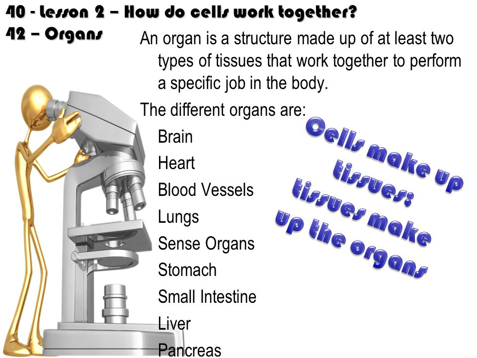 40 - Lesson 2 – How do cells work together.
