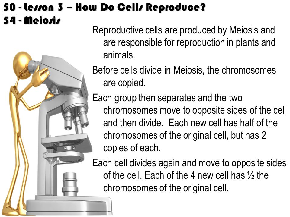 50 - Lesson 3 – How Do Cells Reproduce.