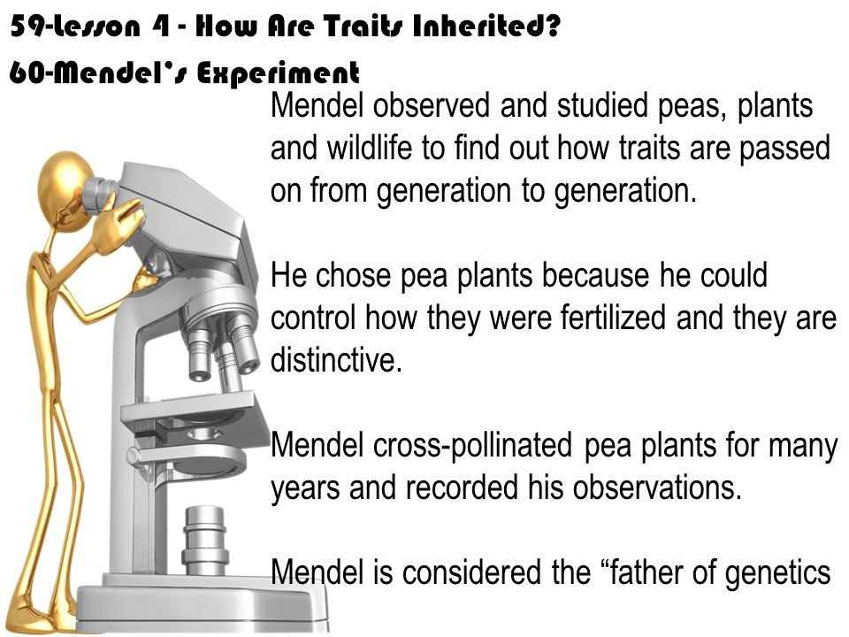 59-Lesson 4 - How Are Traits Inherited.