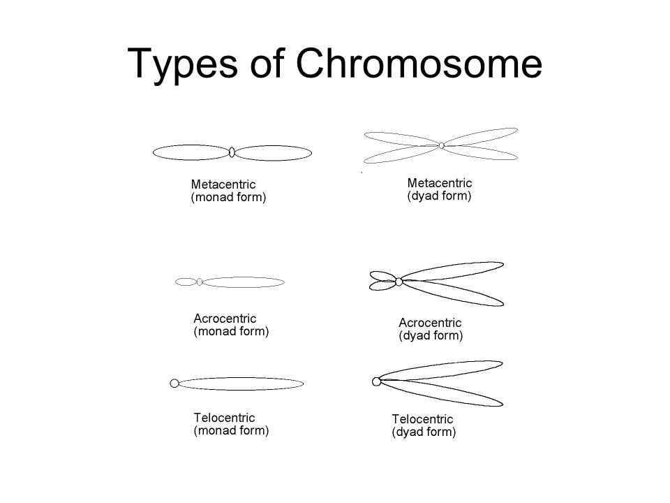 Variations in Chromosome Number The suffix -ploidy refers to the number of haploid chromosome sets.