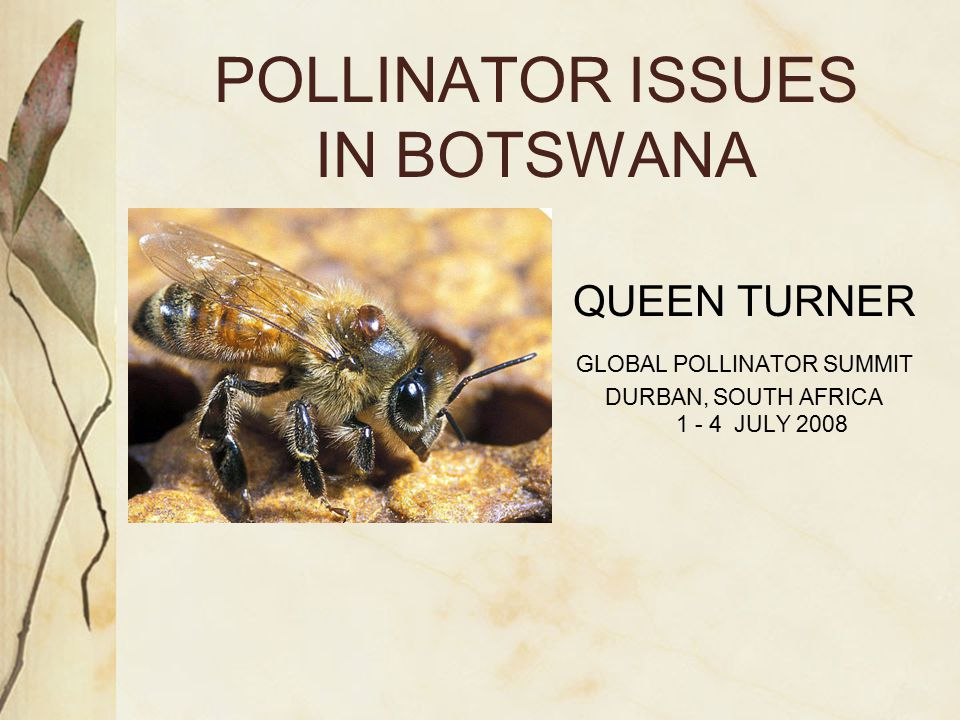 POLLINATOR ISSUES IN BOTSWANA QUEEN TURNER GLOBAL POLLINATOR SUMMIT DURBAN, SOUTH AFRICA 1 - 4 JULY 2008