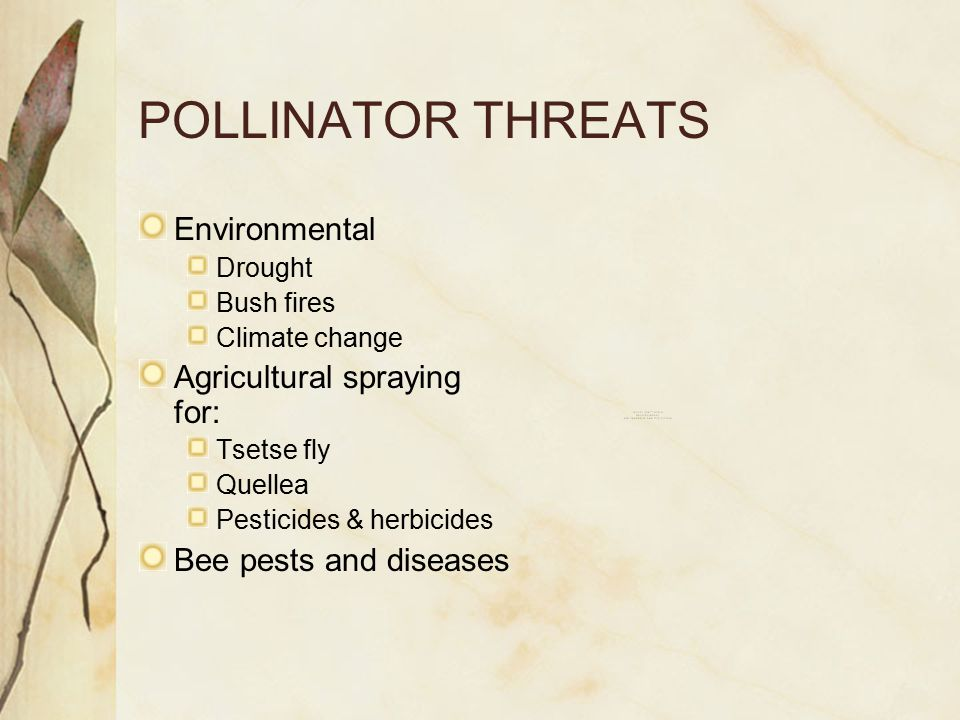 POLLINATOR THREATS Environmental Drought Bush fires Climate change Agricultural spraying for: Tsetse fly Quellea Pesticides & herbicides Bee pests and diseases