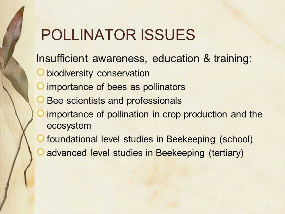 POLLINATOR ISSUES Insufficient awareness, education & training: biodiversity conservation importance of bees as pollinators Bee scientists and professionals importance of pollination in crop production and the ecosystem foundational level studies in Beekeeping (school) advanced level studies in Beekeeping (tertiary)
