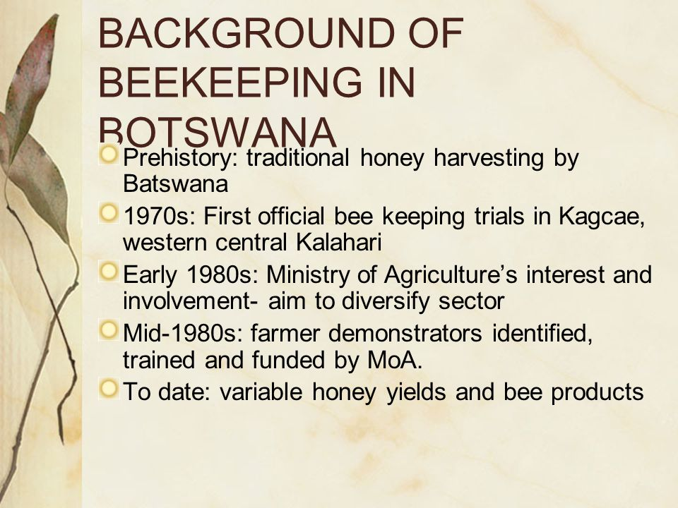 BACKGROUND OF BEEKEEPING IN BOTSWANA Prehistory: traditional honey harvesting by Batswana 1970s: First official bee keeping trials in Kagcae, western central Kalahari Early 1980s: Ministry of Agriculture's interest and involvement- aim to diversify sector Mid-1980s: farmer demonstrators identified, trained and funded by MoA.