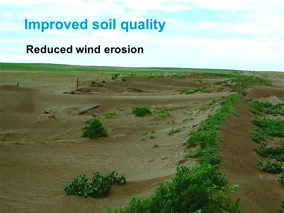 Improved soil quality Reduced wind erosion