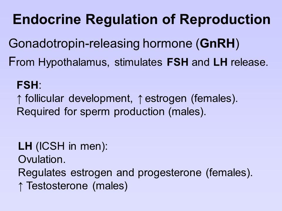 Endocrine Regulation of Reproduction Gonadotropin-releasing hormone (GnRH) F rom Hypothalamus, stimulates FSH and LH release. FSH: ↑ follicular develo