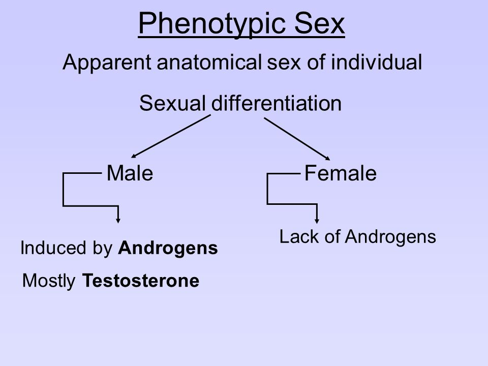 Phenotypic Sex Apparent anatomical sex of individual Sexual differentiation Male Induced by Androgens Mostly Testosterone Female Lack of Androgens