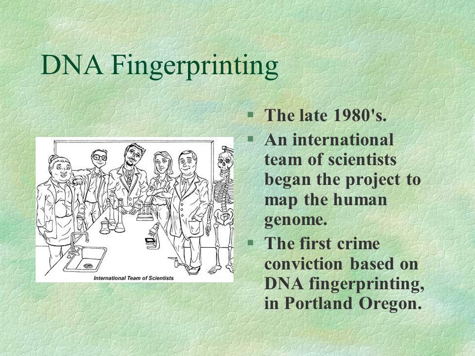DNA Fingerprinting §The late 1980's. §An international team of scientists began the project to map the human genome. §The first crime conviction based