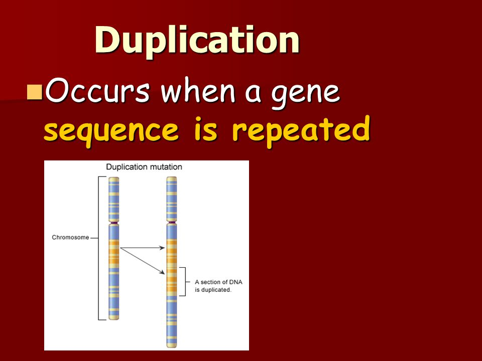 Duplication Occurs when a gene sequence is repeated Occurs when a gene sequence is repeated