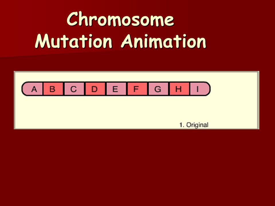 Chromosome Mutation Animation