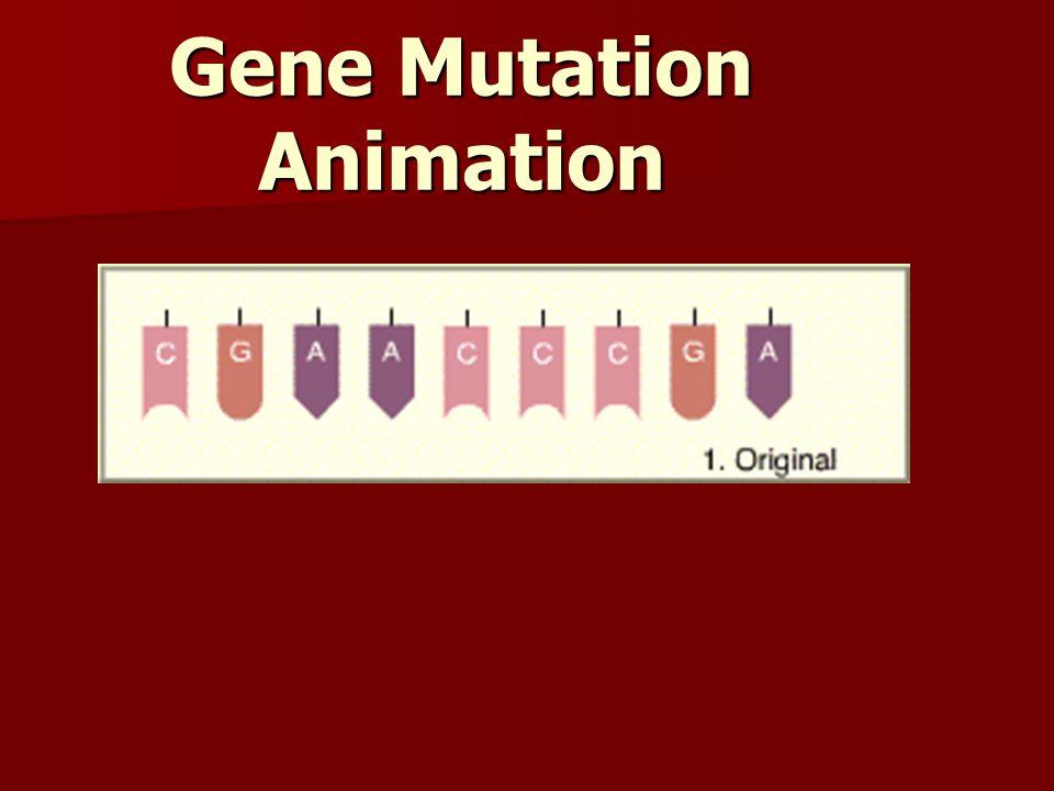 Gene Mutation Animation