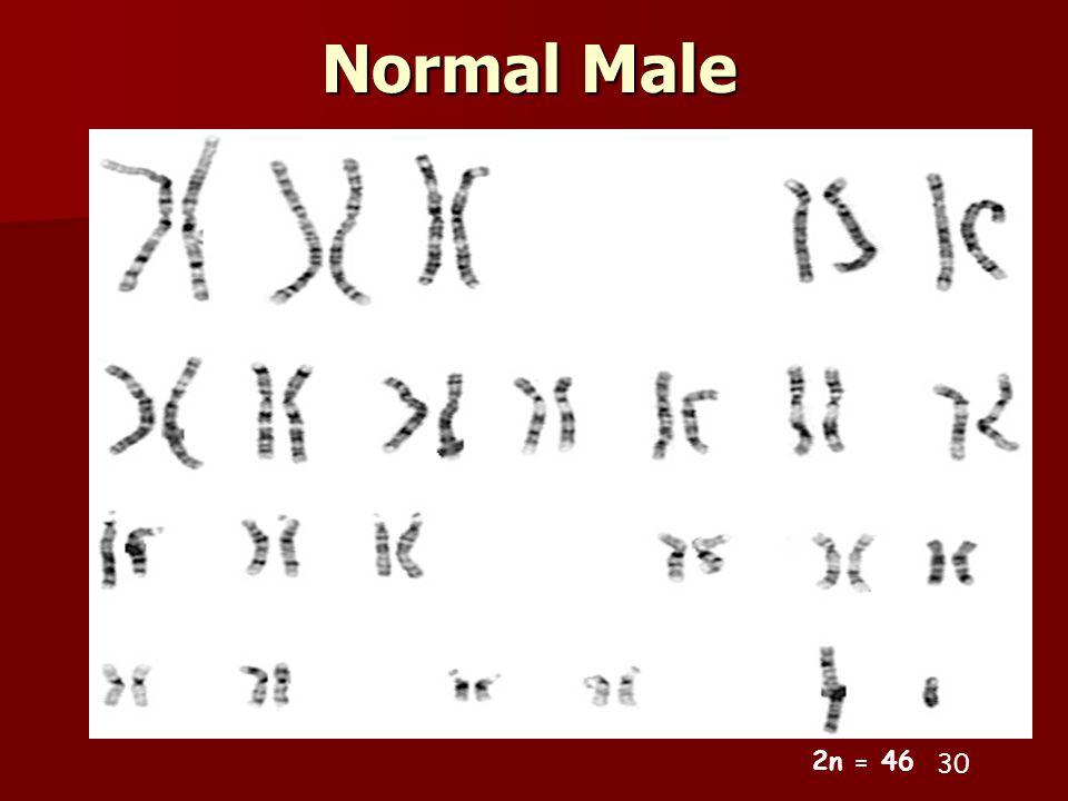 Normal Male 30 2n = 46