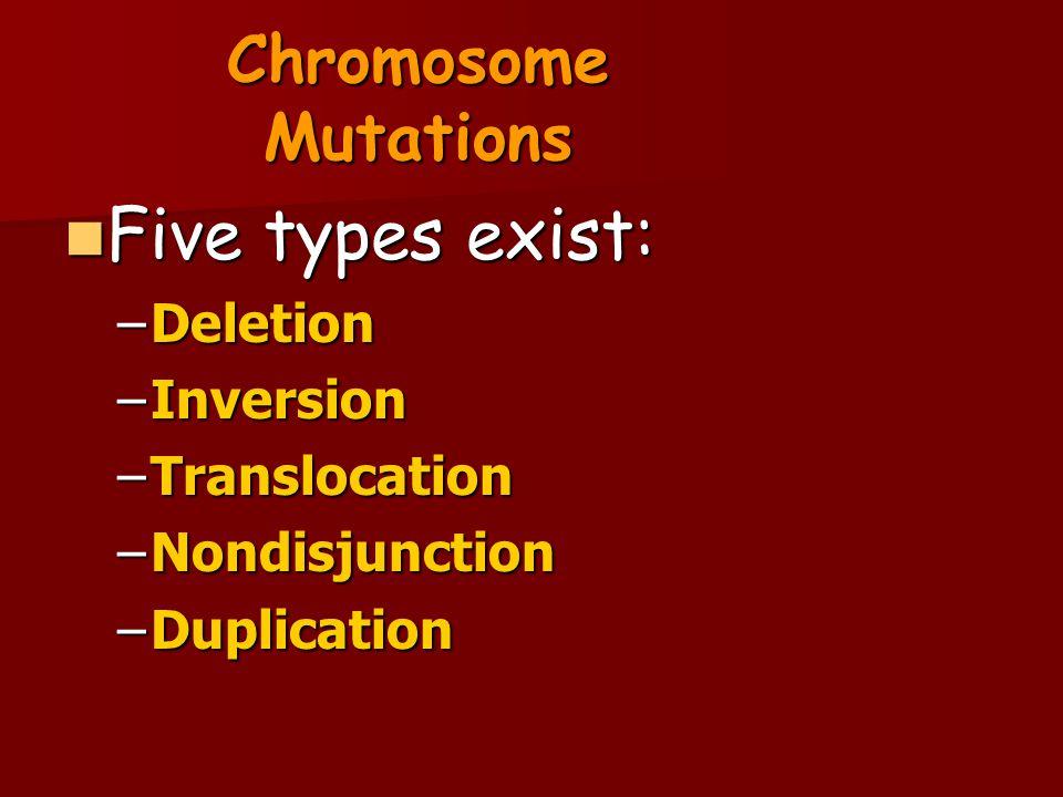 Chromosome Mutations Five types exist: Five types exist: –Deletion –Inversion –Translocation –Nondisjunction –Duplication