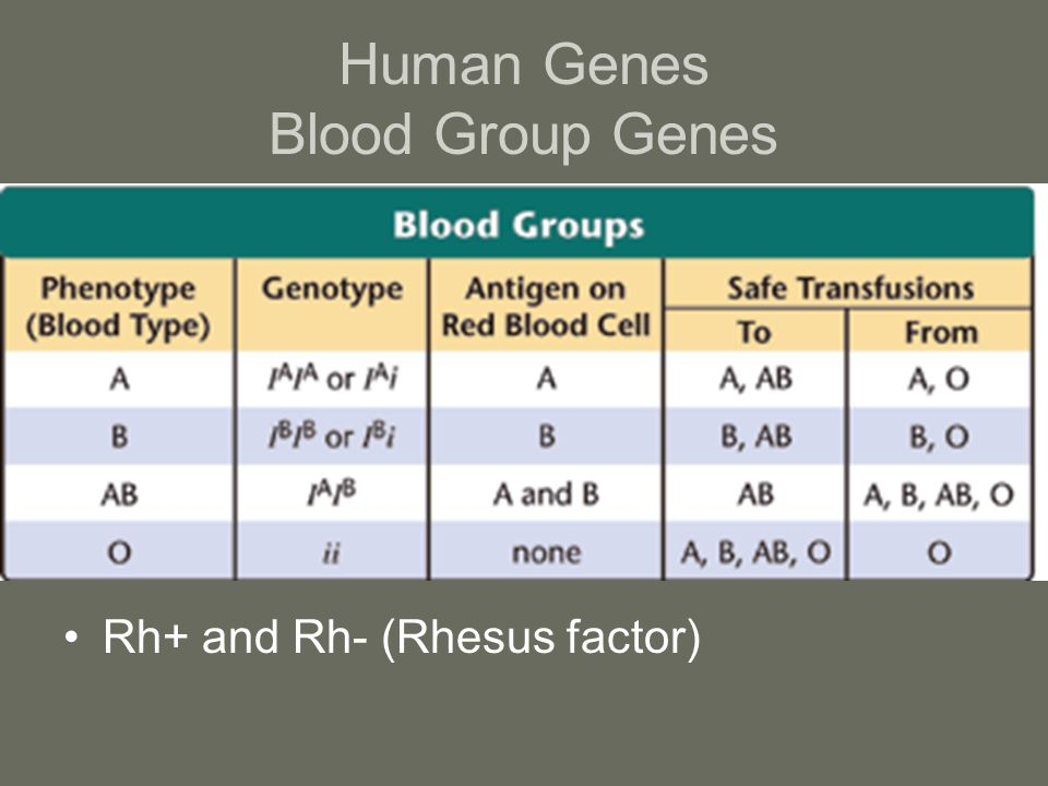 Human Genes Blood Group Genes Rh+ and Rh- (Rhesus factor)