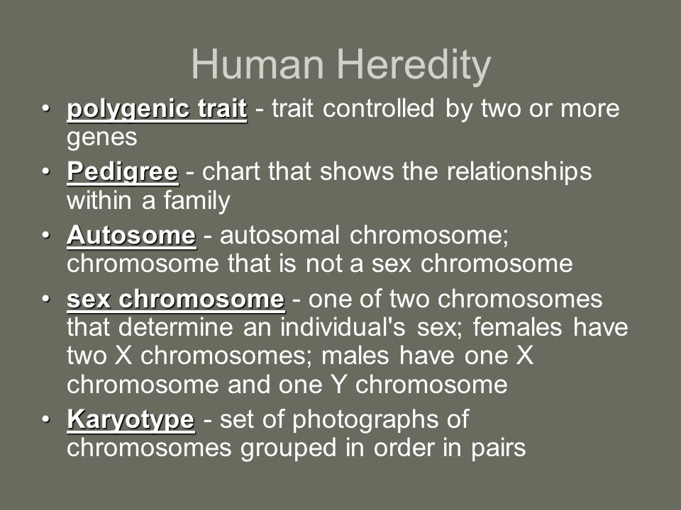 Human Heredity polygenic traitpolygenic trait - trait controlled by two or more genes PedigreePedigree - chart that shows the relationships within a f