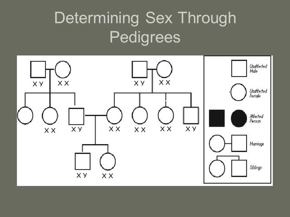 Determining Sex Through Pedigrees