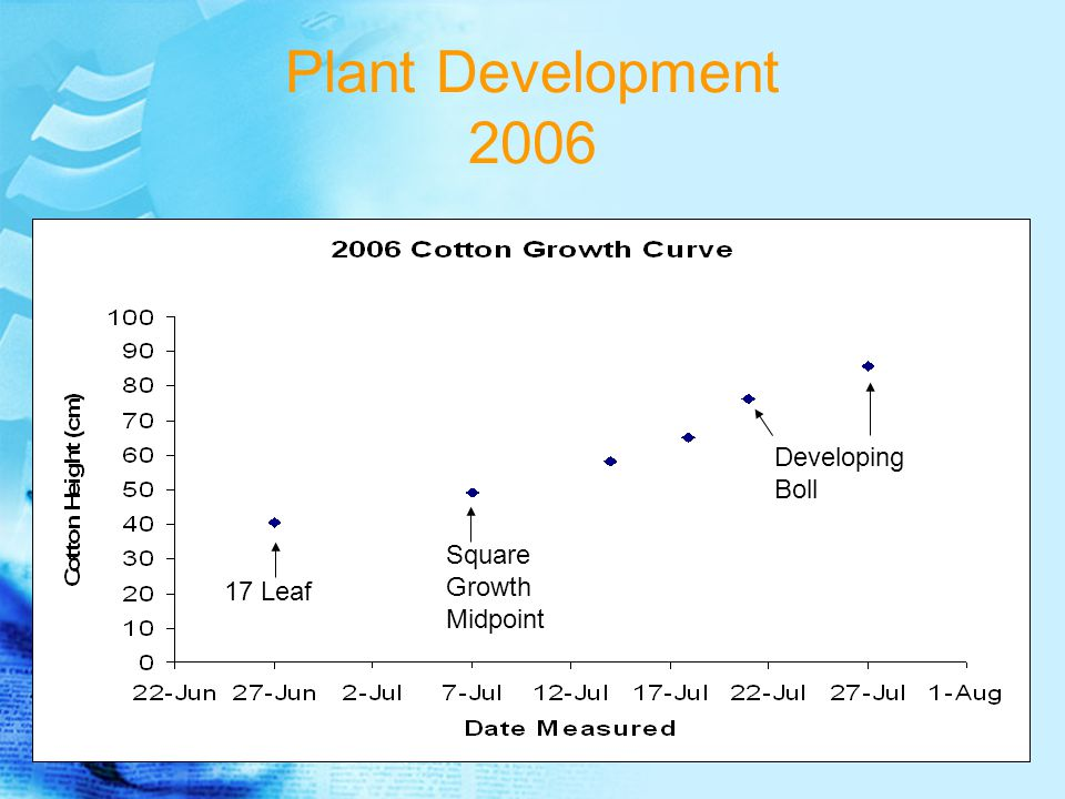 Plant Development 2006 17 Leaf Square Growth Midpoint Developing Boll
