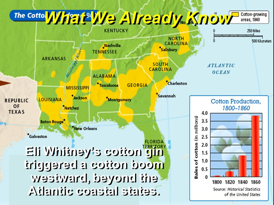 What We Already Know Eli Whitney's cotton gin triggered a cotton boom westward, beyond the Atlantic coastal states.
