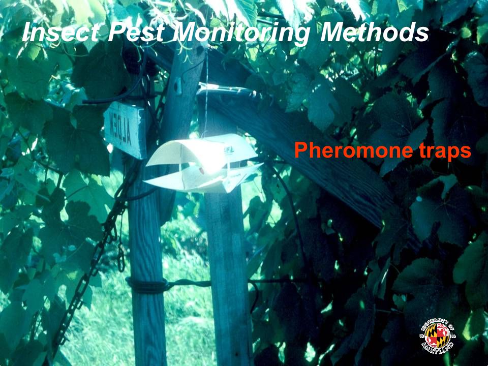 Insect Pest Monitoring Methods Pheromone traps