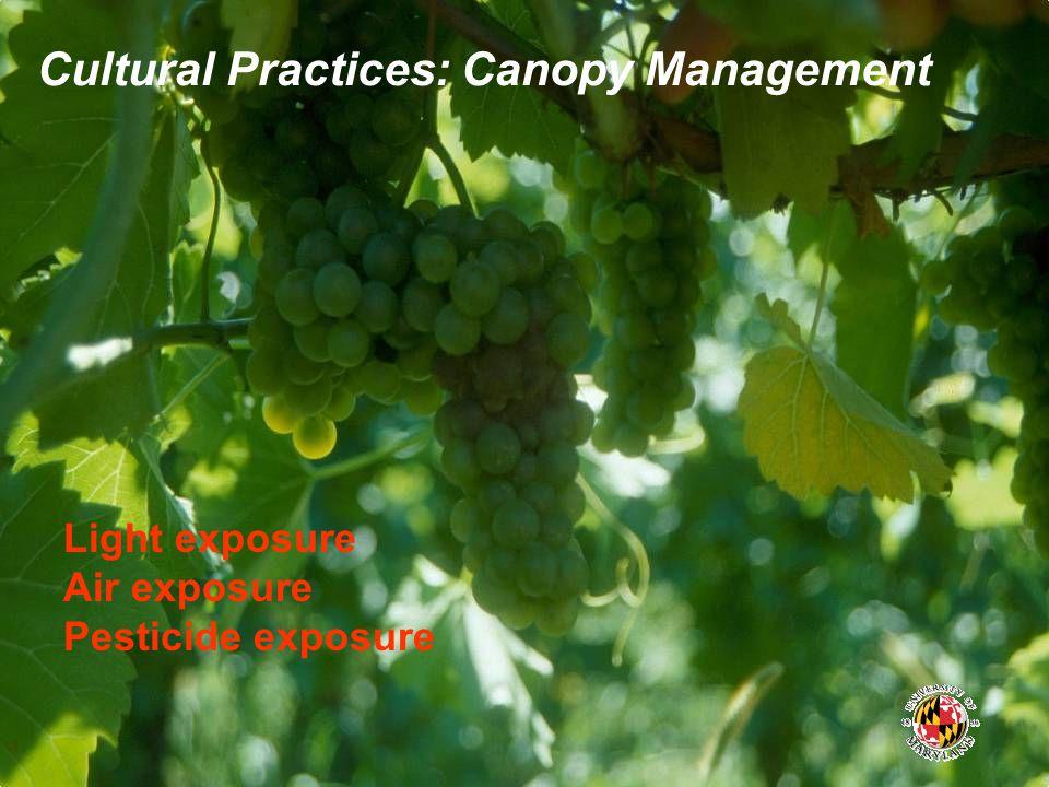 Cultural Practices: Canopy Management Light exposure Air exposure Pesticide exposure